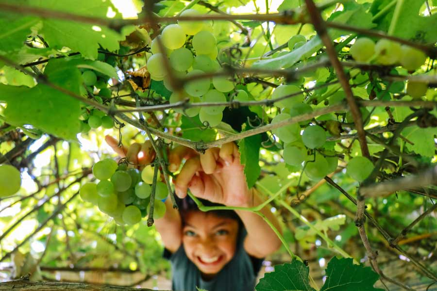 outdoor-fun-fruit-picking-sydney-kids-christmas-holidays-activities-dani-t